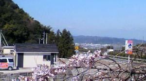 桜の下から霊園を見ました