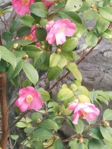 庭先の花5