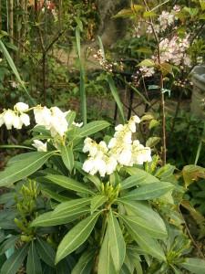 庭先の花3