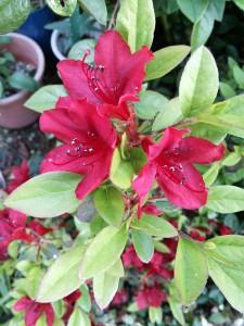 庭先の花8