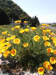 園内の花H27年5月