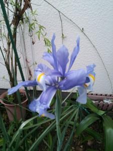 庭先の花7