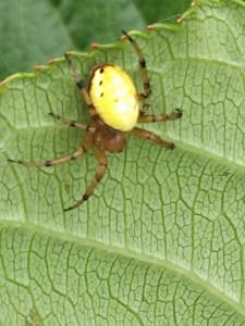 270624蜘蛛ちゃん