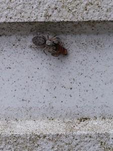 蜘蛛VS小虫20160727